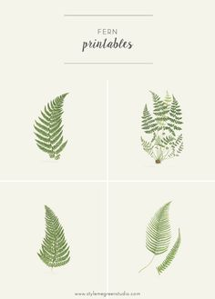 FERN COLLECTION FREE PRINTABLES — Style Me Green