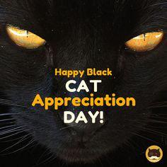 Happy Black Cat Appreciation Day! Videos for Cats to Watch: http://www.tvbini.com  #happyblackcatappreciationday #blackcatappreciationday #catTV #TVforcats #tvbini #catgames #videoforcats #cats #cat #videosforcats #ipadforcats #catgame #catsofinstagram #kittensofinstagram #blackcat #blackcats #blackcatsrock #luckyblackcat #blackcatsrule #blackcatsruletheworld