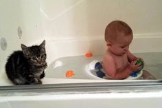 This bath time buddy. | 31 Pictures That Will Restore Your Faith In Cats