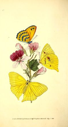 v.2 (1824) - The Naturalist's repository, or, Monthly miscellany of exotic natural history / - Biodiversity Heritage Library