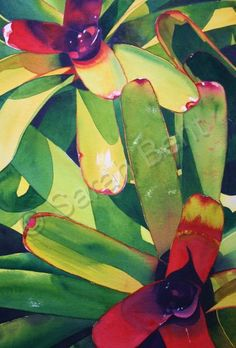 """Bromeliad""+-+by+Sarah+Bent"