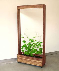 bean screen - becomes a green room divider as the bean vine grows.