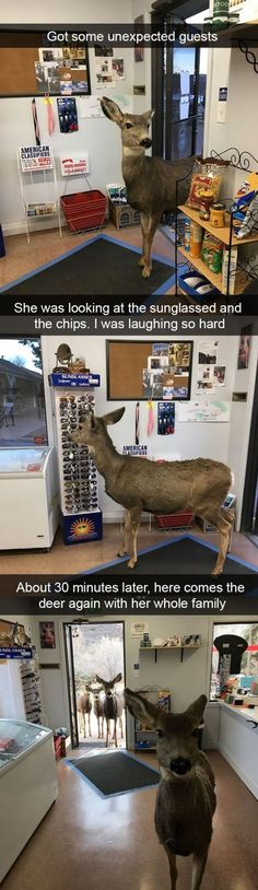20 Best Funny Animal Photos for Saturday Night. Serving only the best funny photos in 2019 that will help you laugh today. Funny Animal Photos, Funny Animal Jokes, Cute Funny Animals, Funny Cute, Funny Dogs, Funny Pictures, Hilarious Photos, Super Funny, Funny Happy