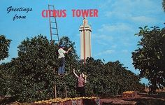 Citrus Tower In Clermont Florida.        The Florida Citrus Tower was built in the middle of thousands of orange groves in Lake County Florida so visitors could view the groves for miles around. I was scared to death to go up there but my parents loved it. We visited several times. If I remember right there was no glass protecting us from the edge (or maybe that was my imagination).