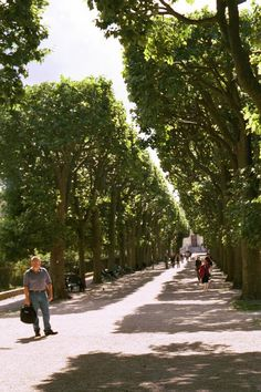 Paris, France, where they love to prune their trees like Americans prune a hedge!