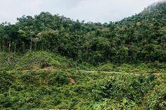 Preventing deforestation by making destruction go viral (Wired UK)