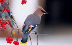 Resultado de imagen de aves