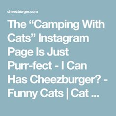 "The ""Camping With Cats"" Instagram Page Is Just Purr-fect - I Can Has Cheezburger? - Funny Cats 