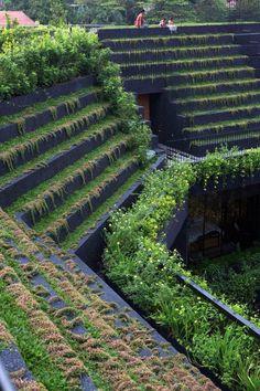 باغهای کرنوال با تراسهای پر از گیاه بر روی بام