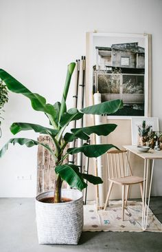 Houseplant of the month: banana plant - Room Divider Room With Plants, House Plants, Banana Plants, Interior Decorating, Interior Design, Planting Flowers, Planters, Sweet Home, House Styles