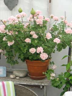 geranium ✩pelargonium Marbacka, I think Container Plants, Container Gardening, Small Gardens, Outdoor Gardens, Pink Geranium, Garden Pots, Garden Inspiration, Houseplants, Beautiful Gardens