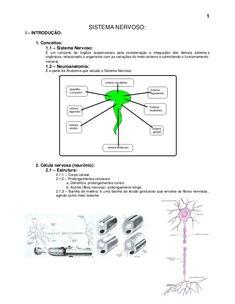 1                                  SISTEMA NERVOSO:I – INTRODUÇÃO:    1. Conceitos:         1.1 – Sistema Nervoso:        ...