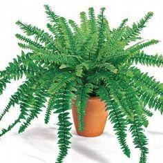 Specialistii in Feng Shui spun ca unele plante au proprietati magice si absorb energia negativa din casa. Iata care sunt acestea: 1. Bambusul Bambusul este una dintre cele mai norocoase plante. Aceasta reprezinta longevitatea si... Feng Shui, Cactus Plants, Wisteria, Aloe, Herbs, Flowers, Diy, Health, Interiors
