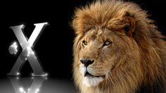 #hd #lion #icon Lion Wallpaper, Wallpaper Space, Lion Face Pictures, Lion Icon, Fire Lion, Totem Tattoo, Mac Desktop, Rasta Lion, Roaring Lion