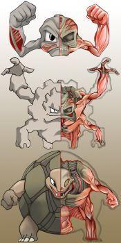 PokeNatomy- Geodude Evolution by Christopher-Stoll on DeviantArt Pokemon Memes, Pokemon Fan Art, Cool Pokemon, Pokemon Go, Pokemon Fusion, Pokemon In Real Life, Pikachu, Bd Comics, Pokemon Pictures