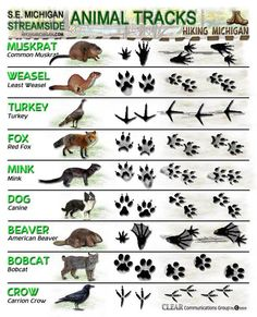 Latest ANIMAL TRACKS ID sheets | HIKING MICHIGAN