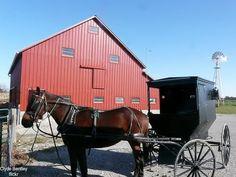 Amish Buggy and Barn