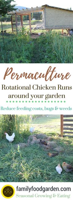 Urban Gardening Permaculture Rotational Chicken Runs around your Garden - Permaculture design ideas for chicken runs around your garden. A chicken moat is excellent for weed control, bug control Easy Chicken Coop, Chicken Garden, Chicken Runs, Permaculture Design, Permaculture Farming, Agriculture, Raising Backyard Chickens, Backyard Farming, Pet Chickens