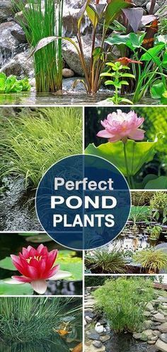 Perfect Pond Plants • Lots of tips, ideas and info to help you create that perfect garden pond! #Ponds