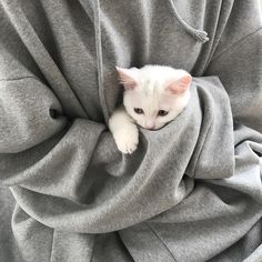 Cats Are Not Just White Cats Albino cats are not simply white cats. Here's everything you need to know about albino kitties.Albino cats are not simply white cats. Here's everything you need to know about albino kitties. Cute Kittens, Cats And Kittens, Derpy Cats, Animals And Pets, Baby Animals, Funny Animals, Cute Animals, I Love Cats, Crazy Cats