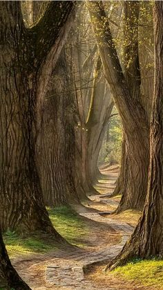 Beautiful tree - Swing into Spring by Lars van de Goor Photography Photography Inspiration Landscape Photography, Nature Photography, Spring Photography, Fantasy Photography, People Photography, Outdoor Photography, Forest Path, Tree Forest, Jolie Photo