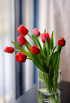Tulips by Zsofia Porzsolt Amazing Flowers, Beautiful Flowers, Purple Tulips, Container Flowers, Flower Photos, Ikebana, Trees To Plant, Spring Flowers, Flower Art