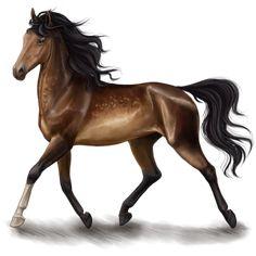 Oфелия, Pferd Curly Horse Dunkelfuchs #46416034 - Howrse