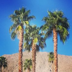 Good morning from Palm Springs, amigos! :) #California #winter #sun #losangeles #london #beautiful #travel #travelpic #vacation #love #palmdesert #PalmSprings #fblogger