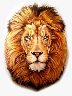 Lion King Pictures, Lion Images, Lion Wallpaper, Cute Pokemon Wallpaper, Lion Head Tattoos, Lion Tattoo, Animal Sketches, Animal Drawings, Lion Head Drawing