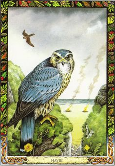 Hawk | The Druid Animal Oracle by Stephanie and Phillip Carr | Meaning: nobility, recollection and cleansing | Reversed: it suggests that a person might be paying too much attention to detail.
