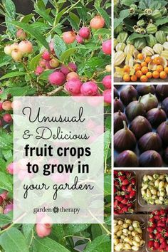 This is a great list of unusual fruit to grow - like ground cherries, pink blueberries, and cocktail kiwis! I generally look for unique edible plants to grow and purchase the standard fare items at the store or farmers market! #spon #gardening