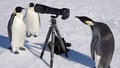 Pinguini in posa per una foto