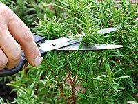 Kompletní průvodce pěstováním a využitím aromatických bylinek