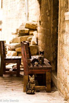 Kotor Cats.