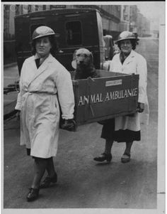 """London 1946  There were very many houses in London in  ruins by the chaos of war. Many adoptable dogs and cats lived. Here, then, the first Lady of animal """"Animal Ambulance"""" in the world was founded."""