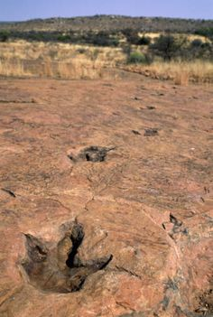 These dinosaur footprints were discovered in the African nation of Namibia.