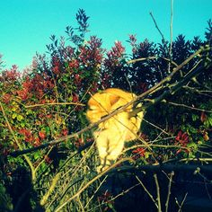 My cat gettig stuck on our Apple Tree!