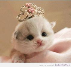 We present to you TOP 30 Cute Cats and Cute Kittens picture gallery. I love cute cats too. I think you like little kittens too. Cats and little kittens are one Cute Cats And Kittens, I Love Cats, Crazy Cats, Kittens Cutest, Kittens Meowing, Cutest Pets, Kittens Playing, Kitty Cats, Fluffy Kittens