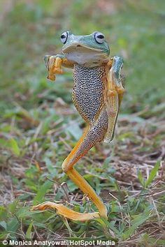 The frog that thinks it's the Karate Kid: Animal pulls off famous film's iconic move