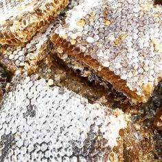 Favos de mel #fresquinho #comer #natural #mel #honeybee #shooting #brilho #abelhas