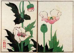中野其玉 Nakano Kigyoku 其玉画譜 20 芥子 Book of pictures 20 Opium poppy