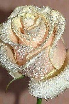 Roses...always roses...always love.