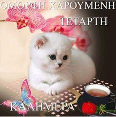 Good Night, Good Morning, Cute Baby Animals, Cute Babies, Teddy Bear, Toys, Nighty Night, Buen Dia, Activity Toys