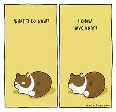 -Làm gì bây giờ?? -Biết rùi... ngủ trưa!!