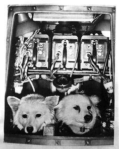 День космонавтики 2018: трогательная галерея собак, побывавших в космосе