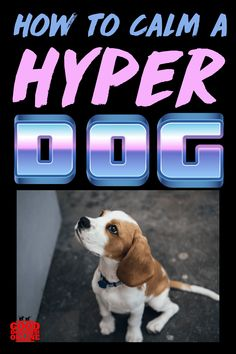 How to Calm a Hyper Dog. Are you wondering why is my dog so hyper all of a sudden? Is your dog hyperactive because of anxiety? Check out these natural remedies to calm your dogs hyperactivity. Brain Training, Dog Training Tips, Hyperactive Dog, Hyper Dog, Excited Dog, Living With Dogs, Medication For Dogs, Dog Care Tips, Pet Care