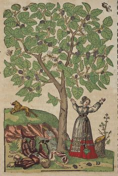 "1580 - ""Mulberry tree""  Kreutterbuch, (Strassburg, 1580) Author: BOCK, Hieronymus (1498–1554) Artist: David Kandel. Hieronymus Bock is one of the three German Fathers of Botany.The first edition of his herbal was published in 1546 with 550 woodcuts by David Kandel. ... In the third part ... the depictions of trees are enlivened by the introduction of genre scenes with animals and people, whose activities allude to the particular uses and character of the trees."