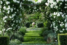 white climbing roses. clive nichols garden photography