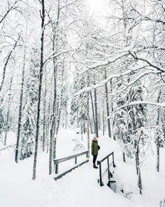 Winter Wonderland in