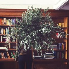 """olive + olivia"" Photo taken by @ruby_marylennox on Instagram, pinned via the InstaPin iOS App! http://www.instapinapp.com (10/26/2014)"
